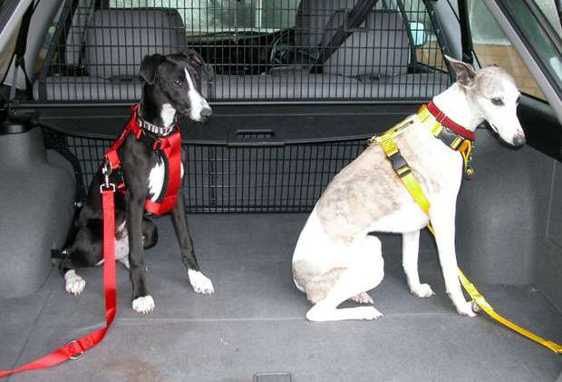 Dog Seat For Car >> Car & Walking Harnesses